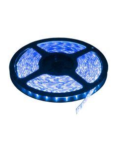 LED traka plava LTR2835/60B-12